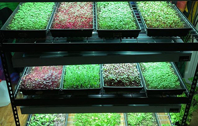 The Microgreenery